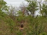 Wandern im Gamereserve in Swasiland