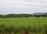 Zuckerrohranbau in Swasiland