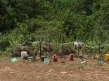 vorbildliche Organisation bei der Waldarbeit ...
