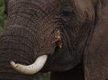 Elefanten ...