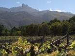 Oaksrest Vineyard an den Swartbergen