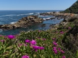 Wanderung im Storms River Mouth NP