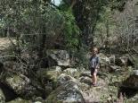 ... und durch einen Urwaldrest