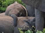 ... und Elefanten ...