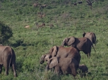 ... und zusammen mit Nashörnern und Nyalas