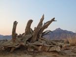 Wüstenstimmung in Hauchabfontein