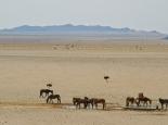 Die wilden Pferde der Namib ...