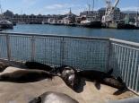 ein Plätzchen für die Robben