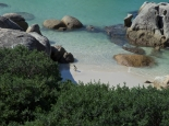Pinguine am Badestrand in Simons Town