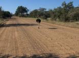 Piste durch den Park in Namibia
