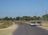 Esel in Botswana