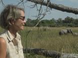Elefanten am Lager