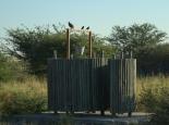 Camp im Makgadikgadi NP