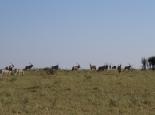 auch Oryxe machen mit