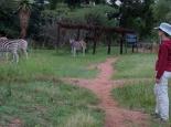 Halbzahme Tiere im Mlilwane NP