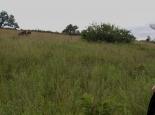 Hippo-Trail