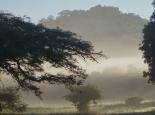 Morgennebel vor der Burg