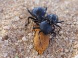 Käfer bei der Arbeit