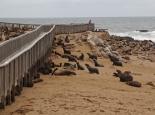die Robben von Cape Cross ...