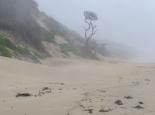 Nebel und Niesel
