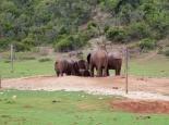 an der Elefantensicheren Wasserstelle
