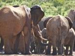 Elefantentreffen