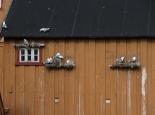 Norwegen/Hamingberg-> bei Ifjord